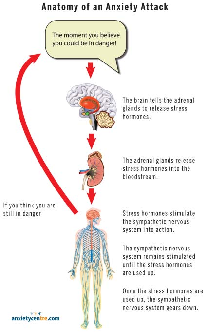 anatomy of an anxiety attack