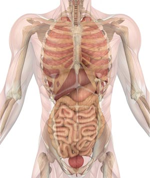 anxiety chest stomach and digestive system