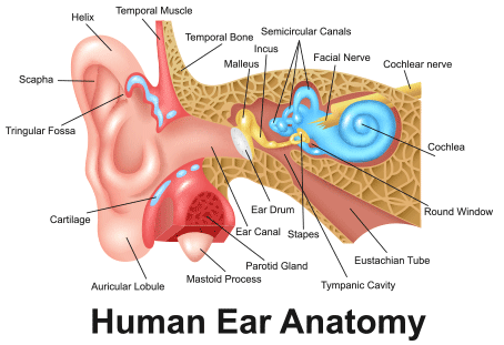 Hearing Loss, Reduced Hearing, Deafness Anxiety Symptom
