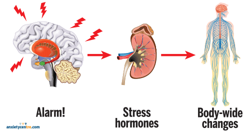 Anxiety 101 stress response illustration
