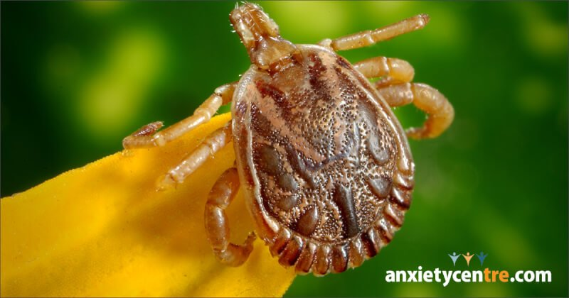 lyme disease and anxiety disorder