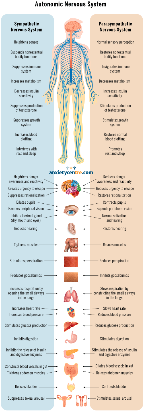 stress response and autonomic nervous system changes