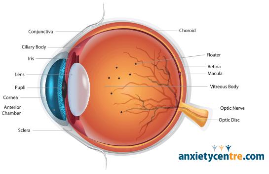 floaters eye anatomy